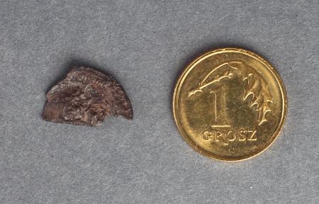 Moneta  Fragment brakteata. Stan zachowania nie pozwala na bliższą identyfikację. Brakteaty to monety wybijane jednostronnie z cienkiej blaszki na miękkiej podkładce. Stempel odciśnięty wypukło na awersie pojawiał się jako wklęsły (negatyw) na rewersie. W postaci brakteatów bito przede wszystkim w XII–XIV wieku w środkowej Europie niskowartościowe denary.